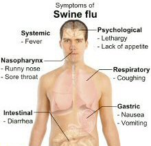 Swine flu responsible for 24 deaths in Thailand so far this year | Samui Times