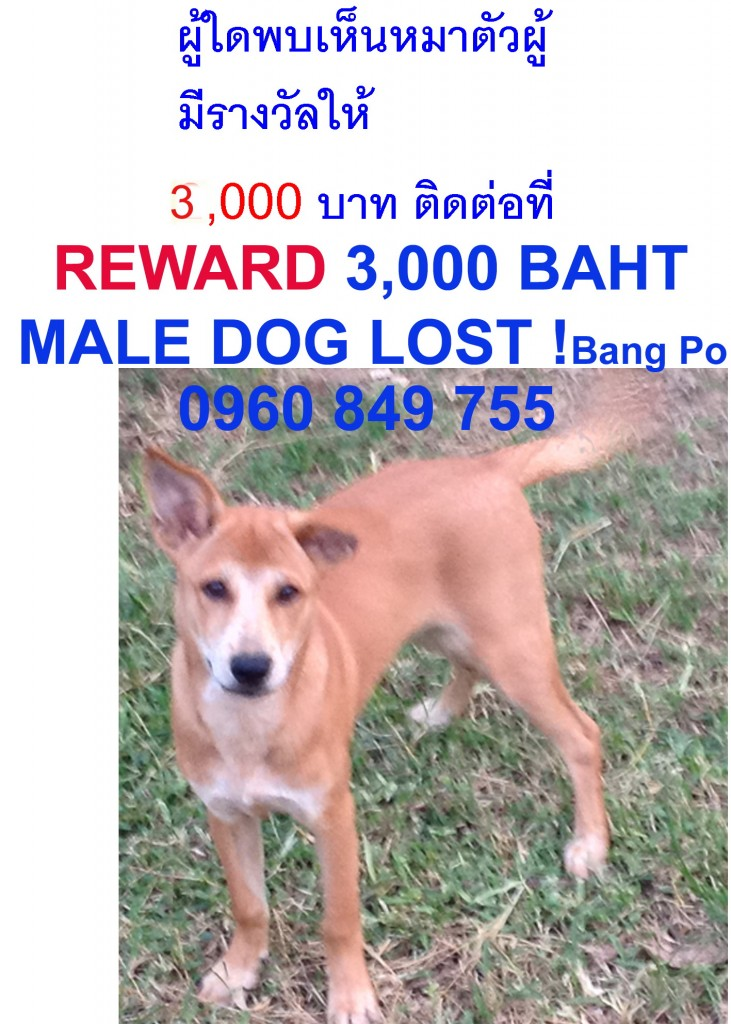 lost dog in bang po