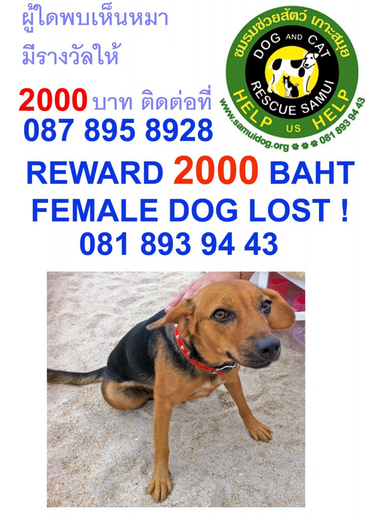 missing dog from Chaweng