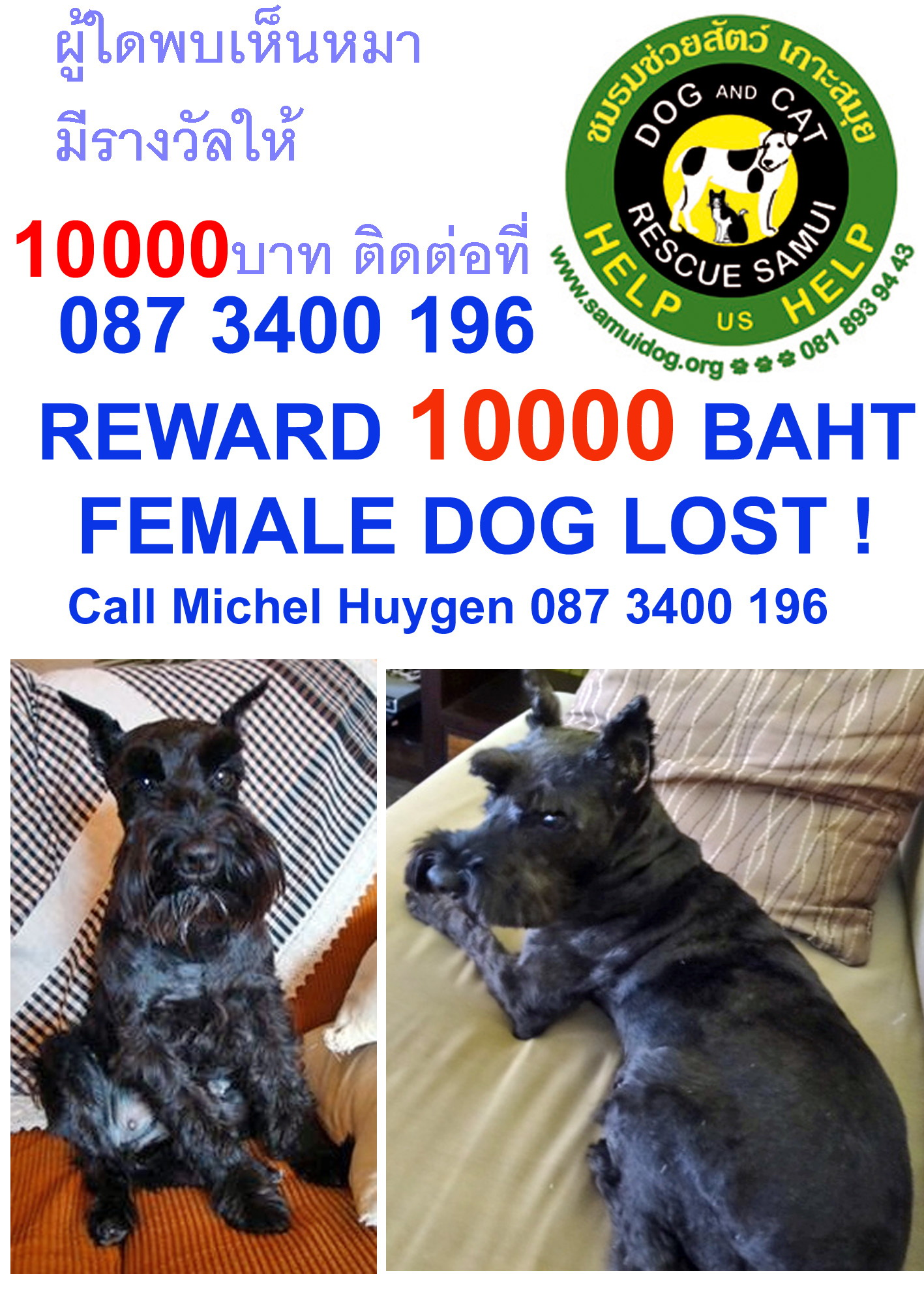 Your help needed to find a lost dog | Samui Times