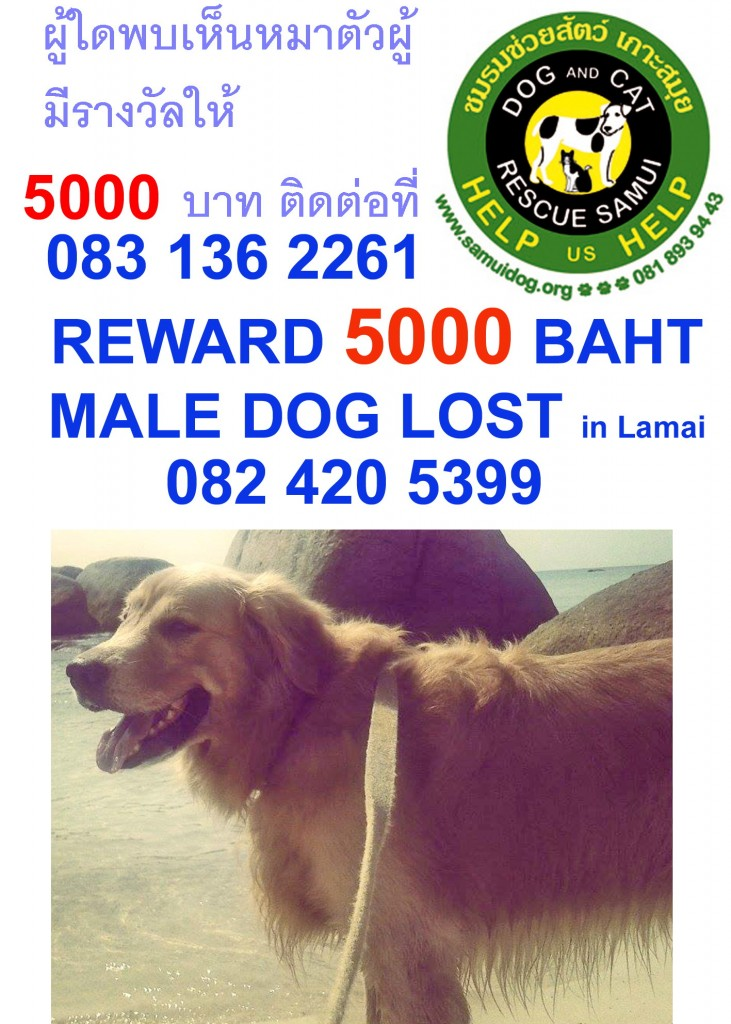 missing dog in Lamai