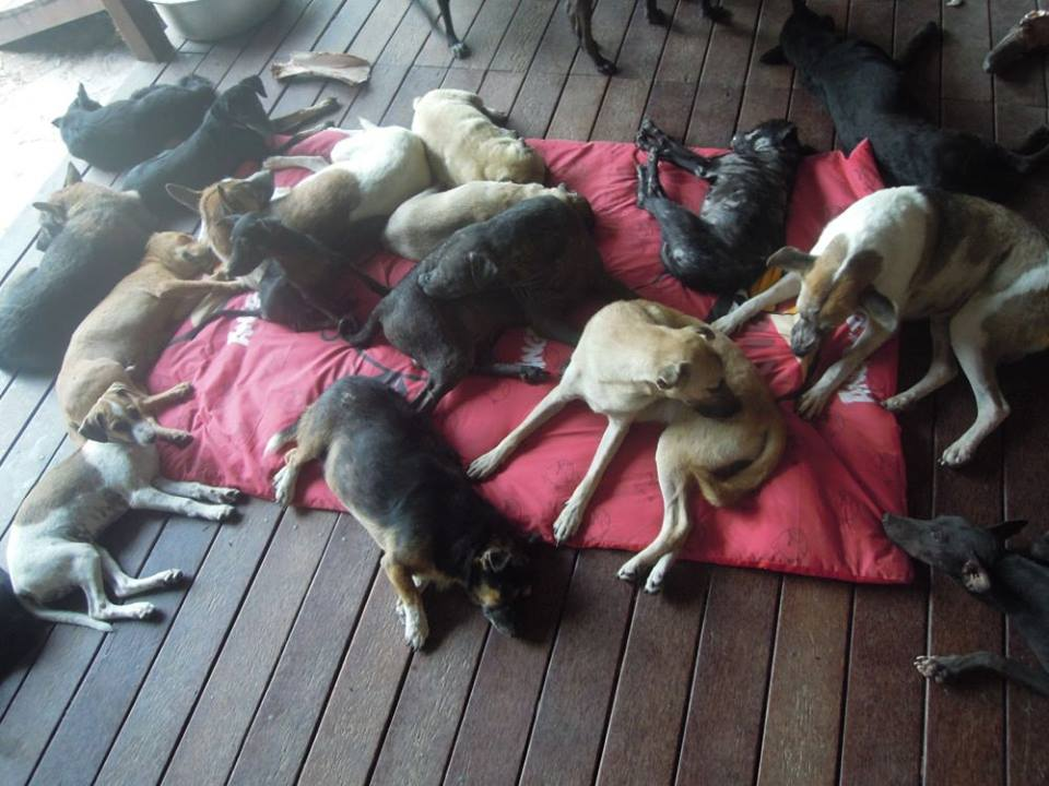 One World Sanctuary Samui desperately needs your help after discovering intruders | Samui Times