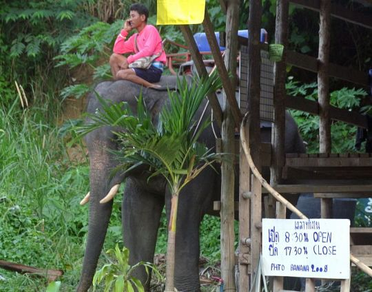 Phuket voters say no to animal tourism, entertainment | Samui Times