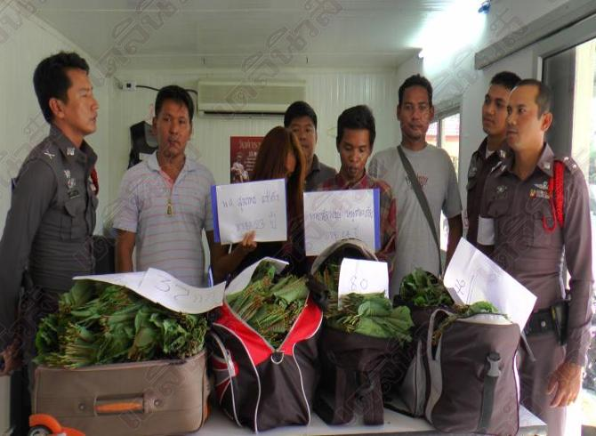 A Guy Wearing Big Name Political Party Jacket Trying to Smuggle Kratom into Samui | Samui Times
