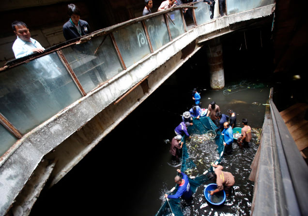 Thousands of fish to be freed from abandoned mall fish hell | Samui Times