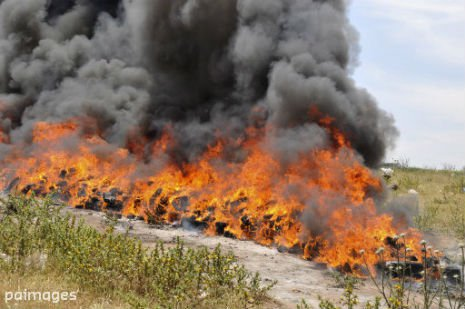 Indonesian police burn 3.3 tons of weed; Get entire town high | Samui Times