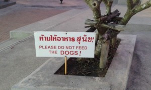 please do not feed the dogs - Koh Samui