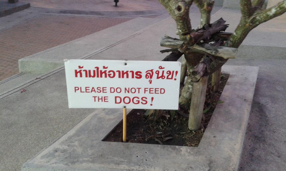 Letter to the Editor – Family Mart Bangrak is not dog friendly | Samui Times