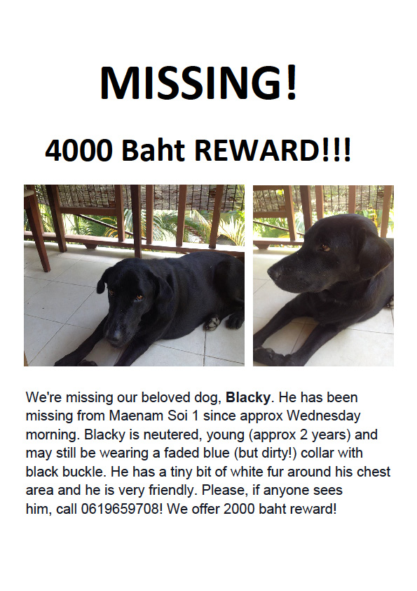 Urgent help needed to find dog missing from Maenam | Samui Times