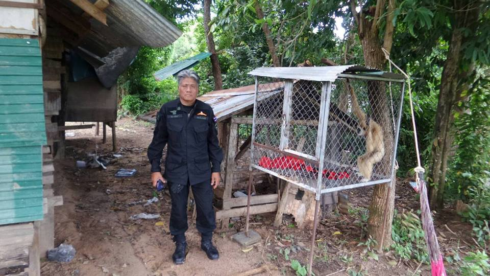 Police and DNP officials raided several houses on Koh Samui for illegal wildlife | Samui Times