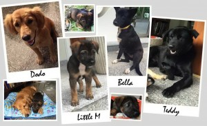home for dogs needed in Samui