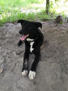 dogs need homes in Koh Samui