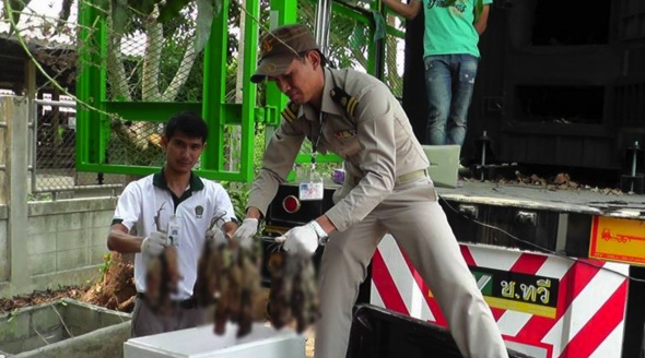 Ugh! Big cargo of rotten Cambodian rats hits Thailand markets | Samui Times