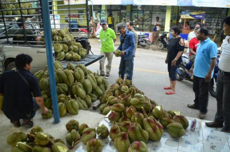 5 tons of dodgy durian seized as Thai officials crackdown on unscrupulous dealers | Samui Times
