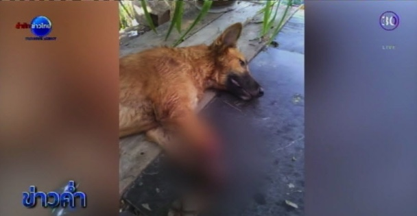 Man who cut off dog paws charged by Thai police | Samui Times
