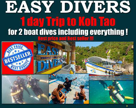Escape the heat with a refreshing 1 day dive trip to Koh Tao | Samui Times
