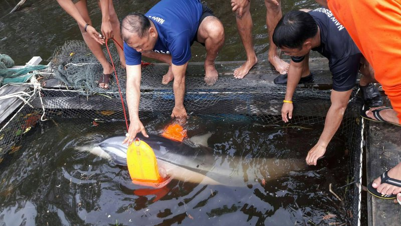Dolphin rescued on Koh Lanta | Samui Times