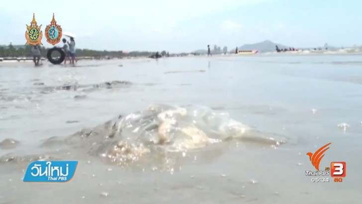 Officials install nets to protect tourists from Portuguese man-of-war | Samui Times