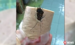 cockroach-found-in-food-thailand