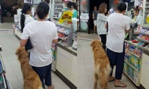 dogs-in-7-eleven