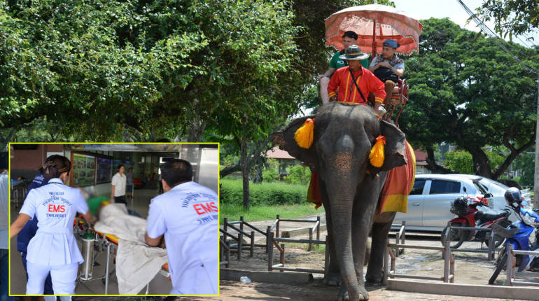 Elephant picks up woman in Ayuthaya in its trunk and tosses her to the ground – she is severely injured | Samui Times