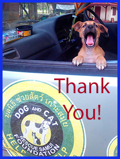 thank-you-dog-rescue