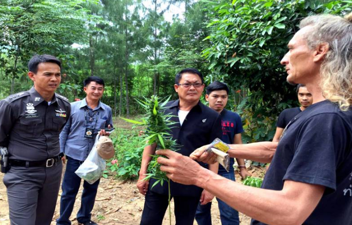 Thai/Aussie arrested after growing more than 200 ganja plants in his garden | Samui Times