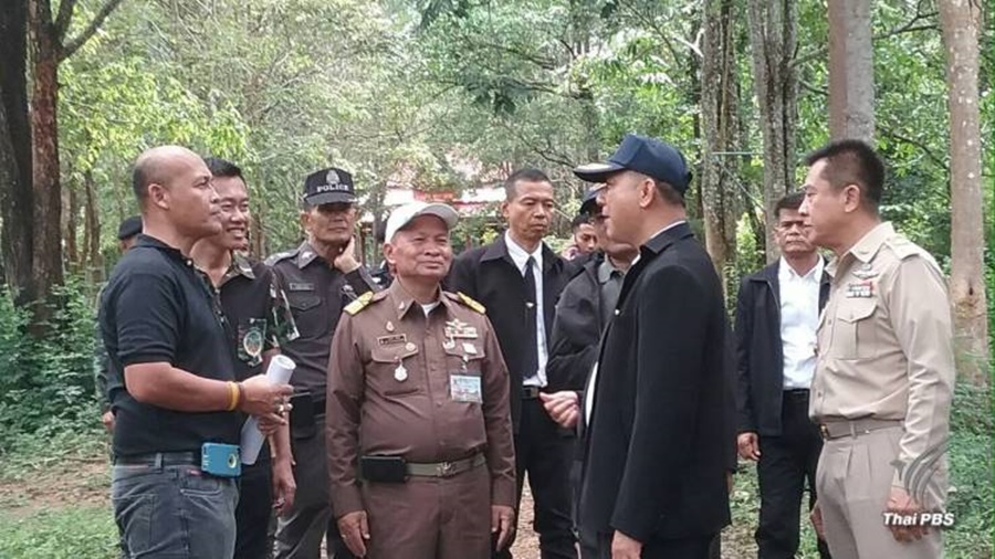 Sandalwood trees picked for royal cremation ceremony of beloved King Bhumibol | Samui Times