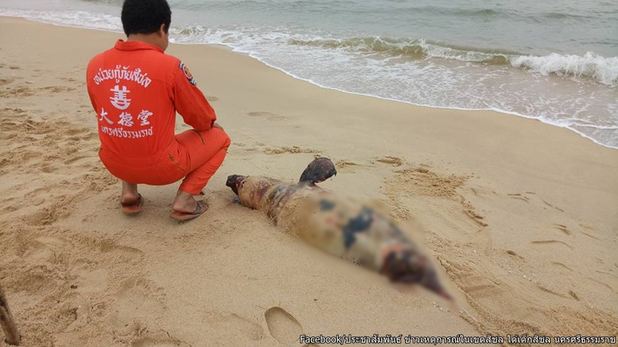 Dead pink dolphin washed ashore on Sichon beach in Nakhon Si Thammarat | Samui Times