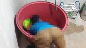 Alcoholic drowns in the lavatory with his head in a bucket | News by Samui Times