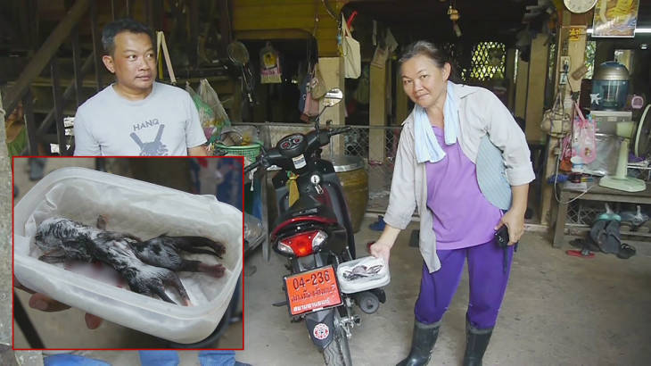 Cat with eight legs brings luck to Chantaburi family – now for the lottery! | Samui Times