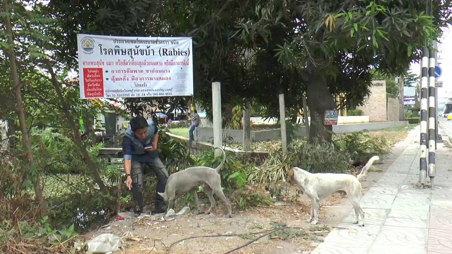 Rabies outbreak detected in Nontaburi | Samui Times