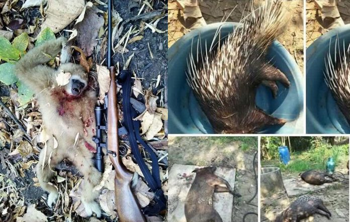 Wildlife officials hunt poachers who shared kills on Facebook | Samui Times