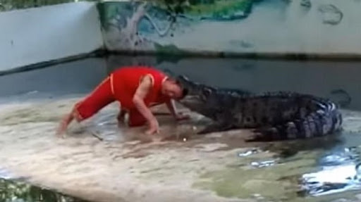 Watch the terrifying moment Koh Samui zookeeper's stunt with a crocodile goes horribly wrong | Samui Times