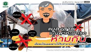 Health department warns of cockroaches eating | News by Samui Times