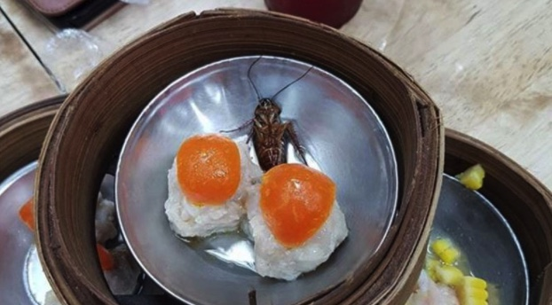 Man offered 10 percent discount for finding cockroach in dim sum | Samui Times