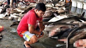 Sharks being fished out of existence in Thai waters | News by Samui Times