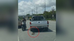 Hunt on for cruel pick-up driver who dragged two cats to their death in Trang | News by Samui Times