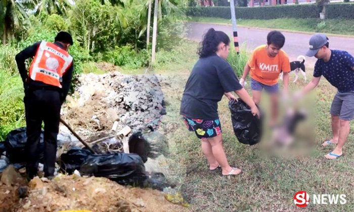 Who has been poisoning the dogs – 40 stray mutts die at Chumphon institute | Samui Times