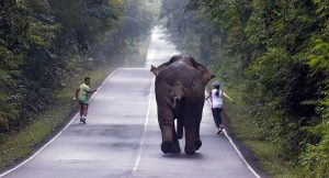 Selfie-craze almost costs runners their lives as elephant sees red | News by Samui Times