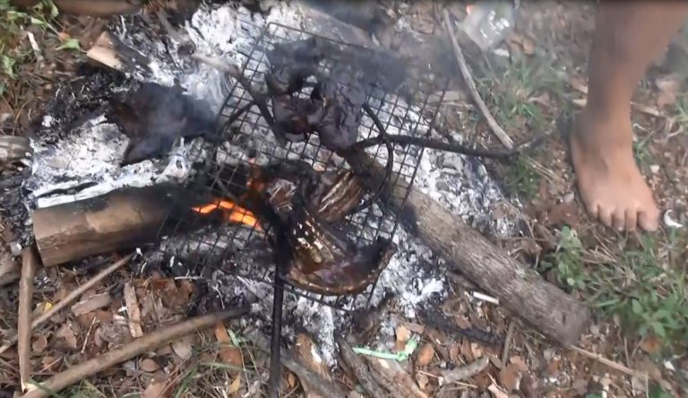 Villagers Caught in the Act of Grilling a Dog in Lampang | Samui Times