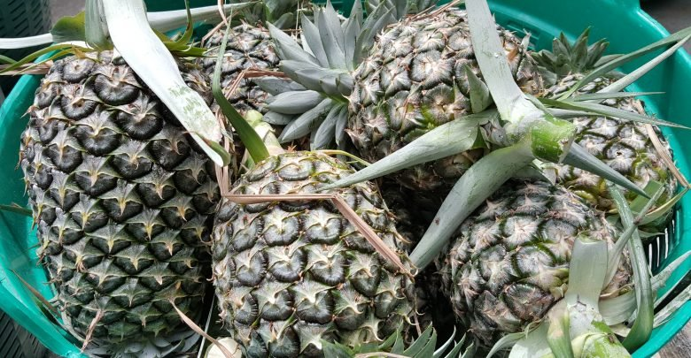 Pineapple prices expected to rise in July | Samui Times