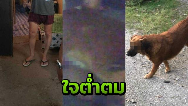 "Police smash ""swinging sex and dating with soi dogs"" ring in Thailand 