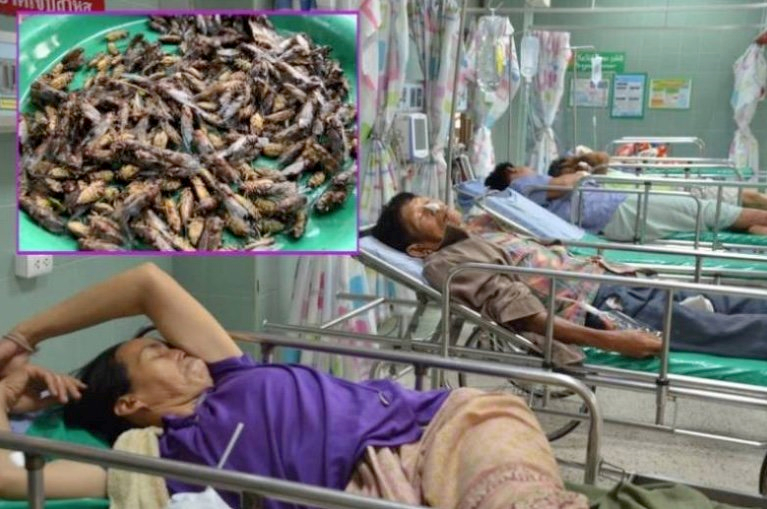 Insect eating: Nine villagers fall sick after eating raw cicadas | Samui Times