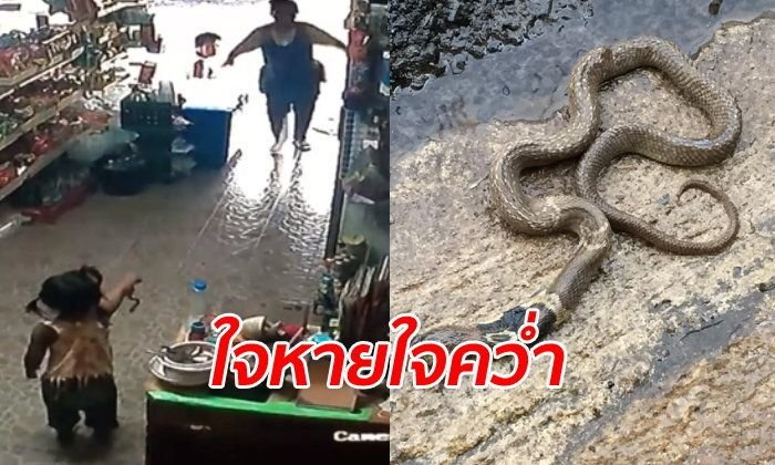 """""""Mystical inscriptions"""" save three year old after she picks up a cobra to show mum! 