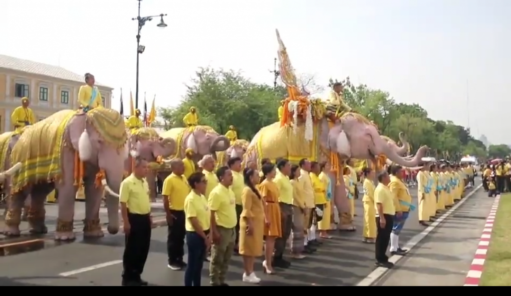 11 beautiful elephants march in homage to His Majesty   News by Samui Times