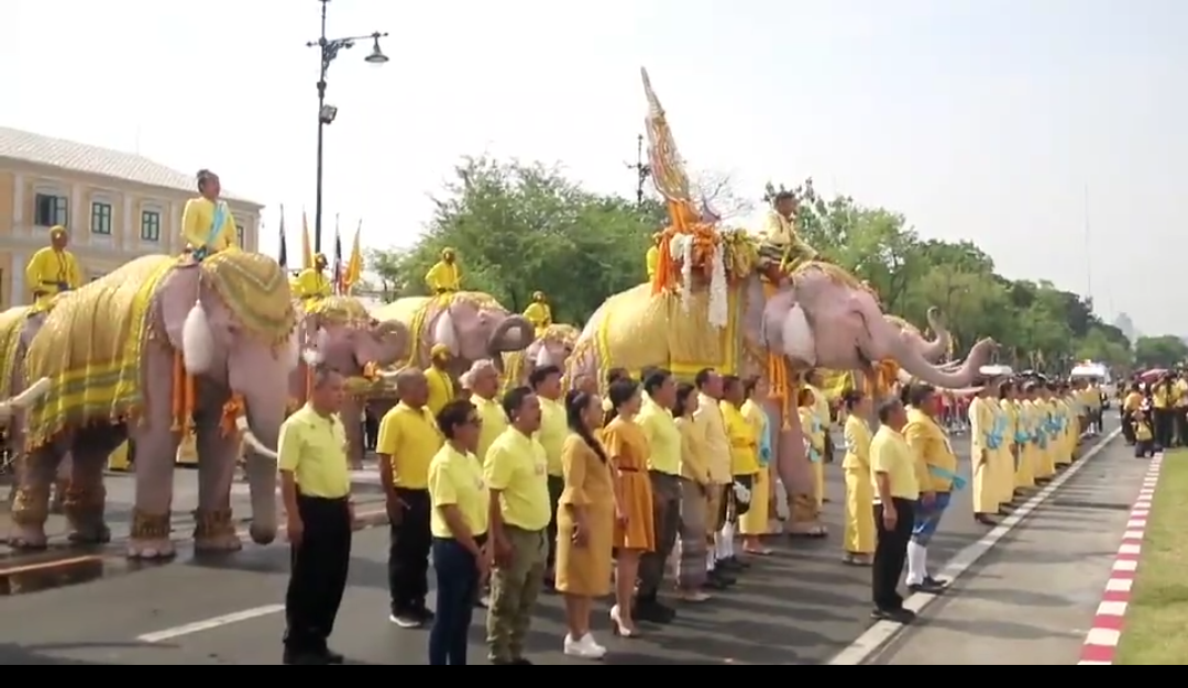 11 beautiful elephants march in homage to His Majesty   Samui Times