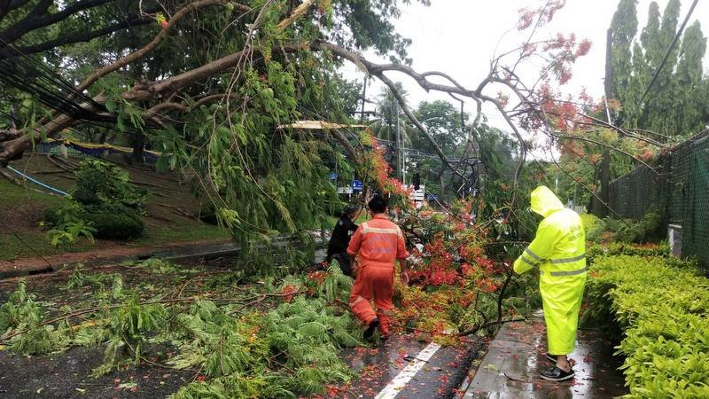 Heavy rains fell tree, disaster officials repeat warning | Samui Times