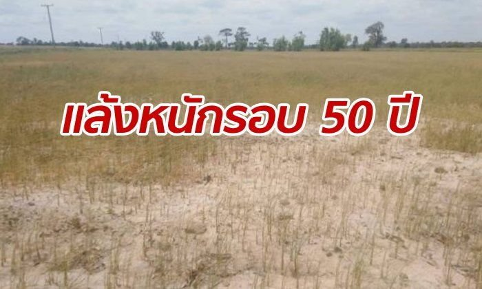 Parts of Thailand facing their worst drought in 50 years | Samui Times
