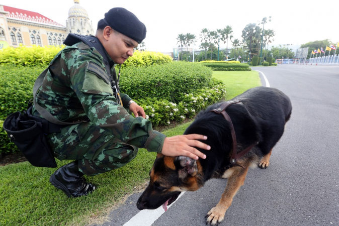 Army to auction dogs that failed commission tests | Samui Times